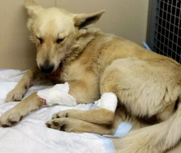 В Волгограде бездомному псу с оторванной челюстью сделали сложную операцию