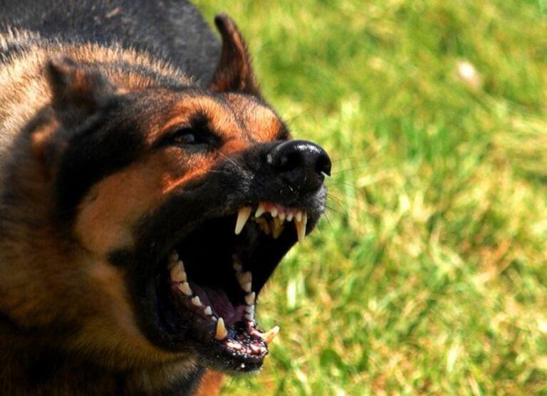 В Волгограде бродячая собака едва не загрызла 9-летнюю девочку возле школы