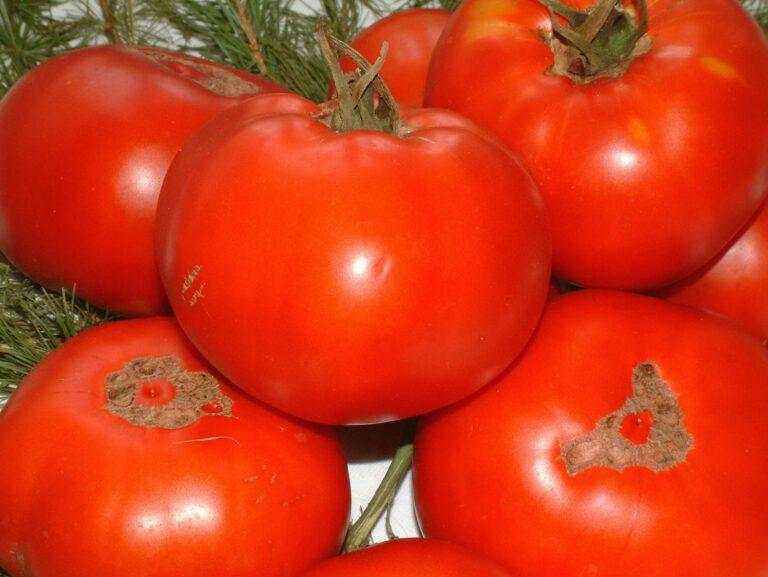 Волгоградстат рапортует об изрядно подешевевших овощах