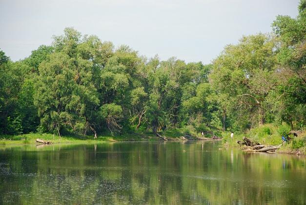 В лесах Волгоградской области начали борьбу с вредителями