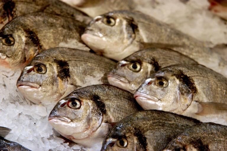 В Астрахани экс-председатель рыболовецкого колхоза нанес предприятию огромный ущерб