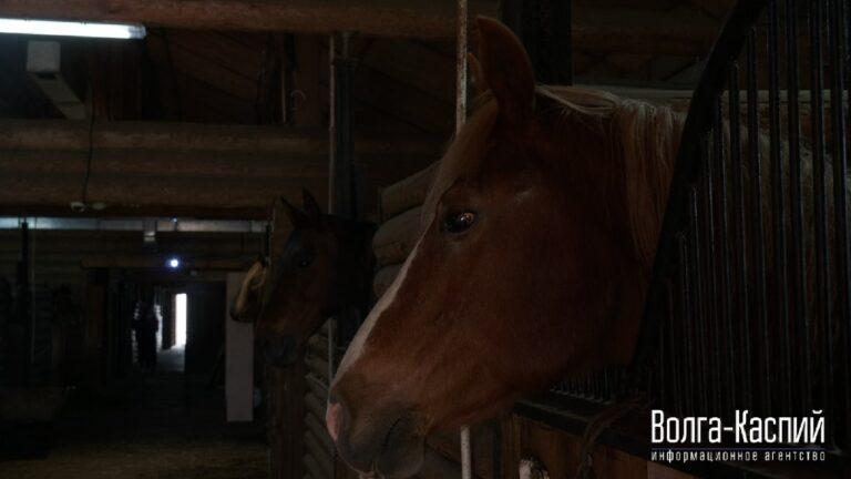 Конюшни «Соснового бора» перейдут в дар Волгоградскому казачьему конно-спортивному клубу