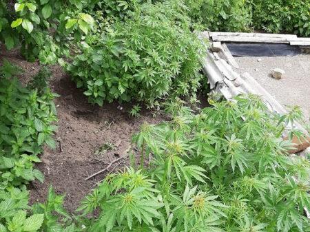 Конопля в волгограде страна где легализовали марихуану