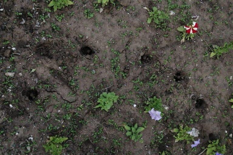 В Волжском вандалы разворовали свежепосаженные цветы из клумбы