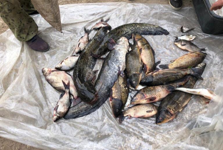 В Волгоградской области за сутки задержали 19 браконьеров