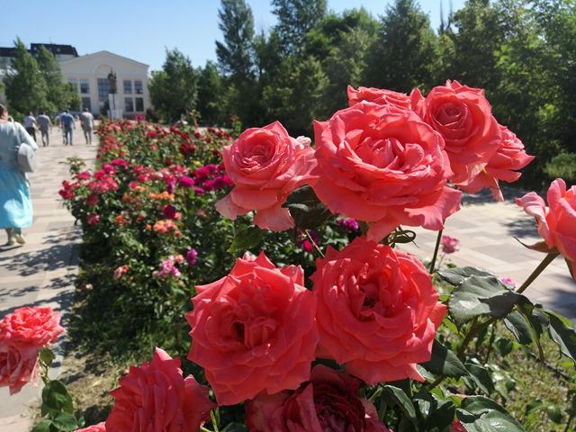 Обновление парка имени Гагарина в Волгограде закончат до конца года