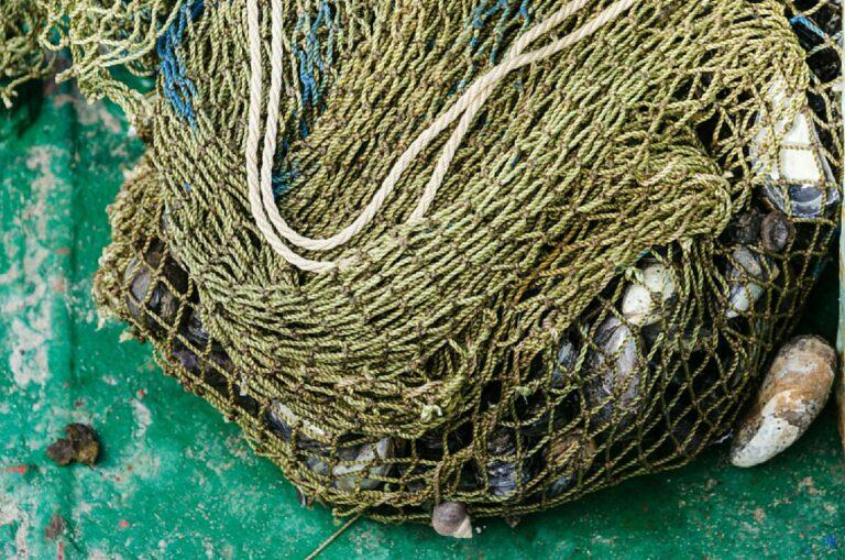 Волгоградские браконьеры ответят в суде за незаконный вылов свыше 200 кило рыбы