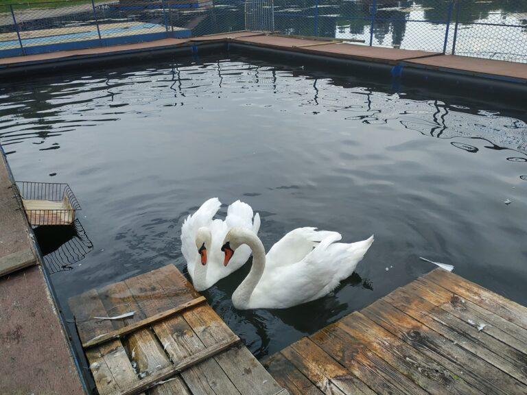 В Самаре ежедневно расчищают озеро в парке имени 50-летия Октября