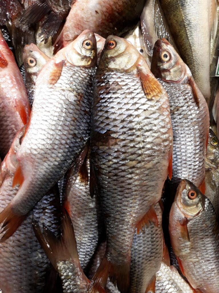 В Волгоградской области изъяли опасную рыбу