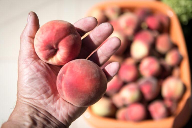 В Волгограде в партии персиков из Ирана нашли опасную плодожорку