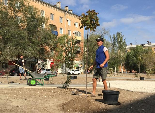 На обновляемой территории у ДК Тракторозаводского района высажены первые растения