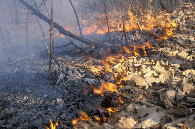 В Камышинском районе Волгоградской области тушат масштабный лесной пожар