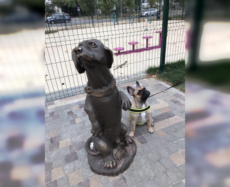 Мэрия Волжского объяснила закрытый вход на новую площадку для дрессировки собак