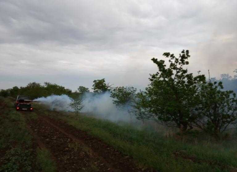 Лесам Волгоградской области угрожают опасные вредители