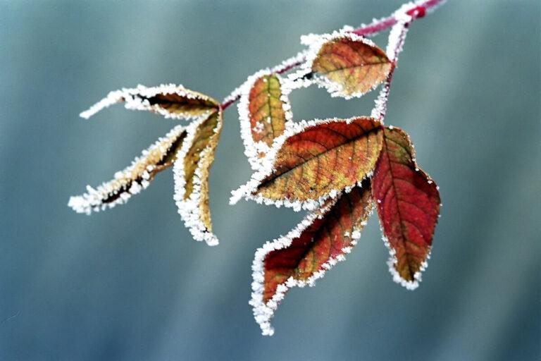 МЧС предупреждает волгоградцев о приближающихся заморозках