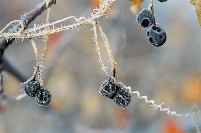 На Волгоградскую область надвигаются пятиградусные заморозки