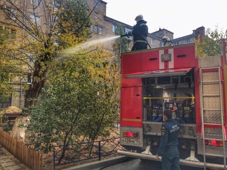 В центре Волгограда загорелось дерево