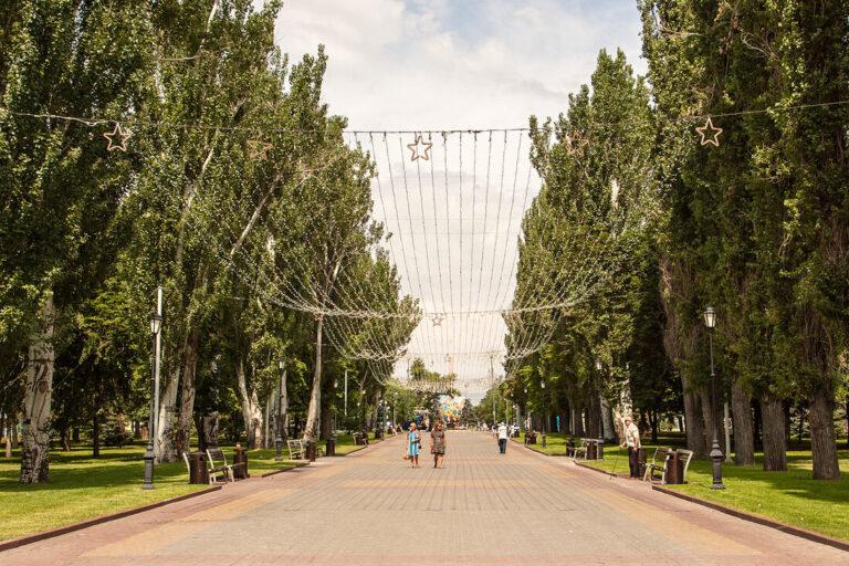 В Центральном районе Волгограда обнаружен опасный вредитель деревьев