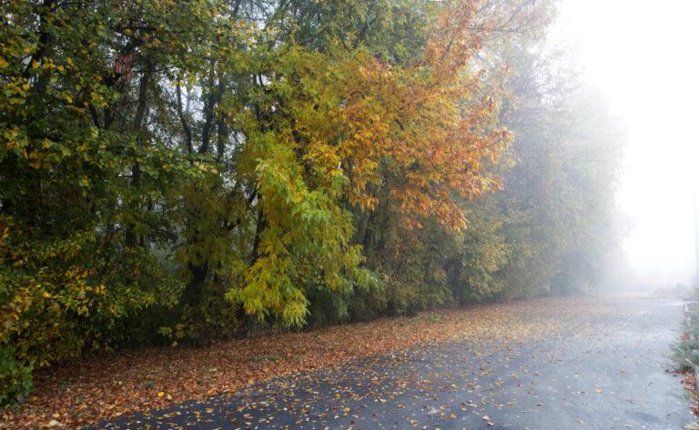 Волгоградцам пообещали туманные дождливые выходные