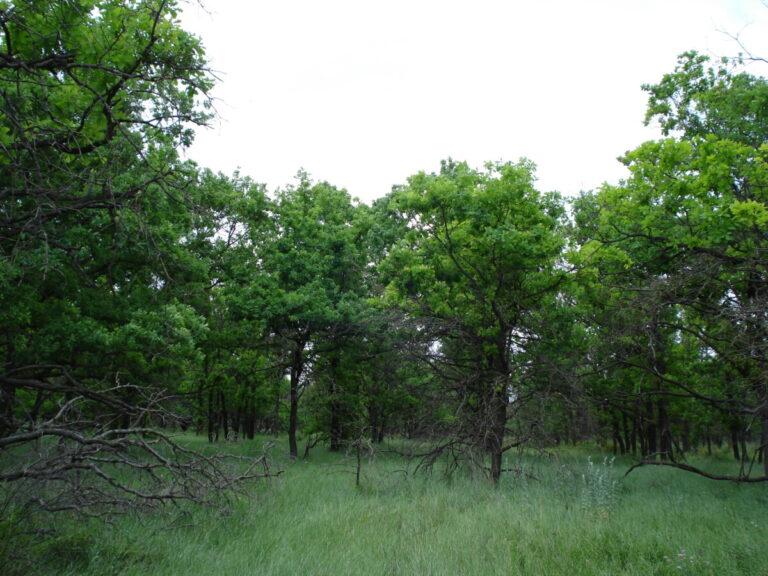 В разгар скандала из-за стройки моста и вырубки дубов регион проводит акцию «Сохраним лес»