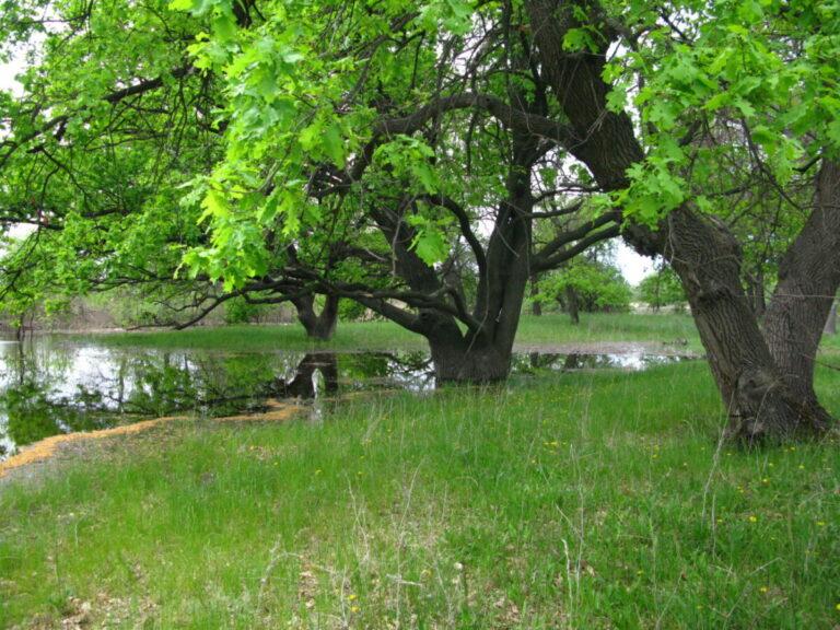 «Гринпис» отстаивает леса Волго-Ахтубинской поймы, идущие под топор из-за стройки моста