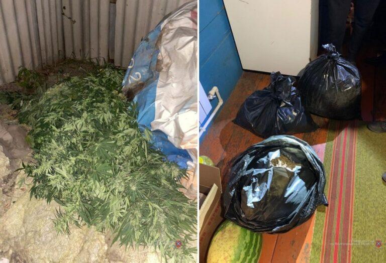Волгоградец хранил дома 40 килограмм марихуаны