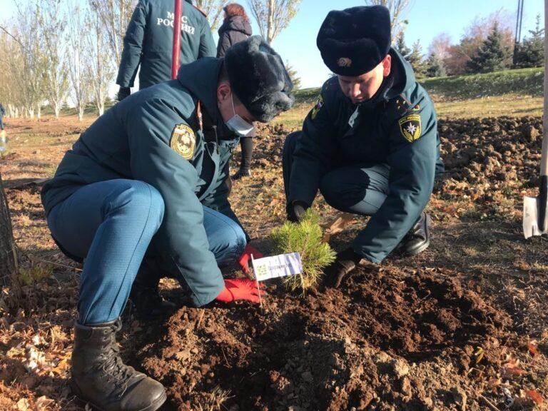 У Мамаева Кургана высажена аллея в честь 30-летия МЧС России