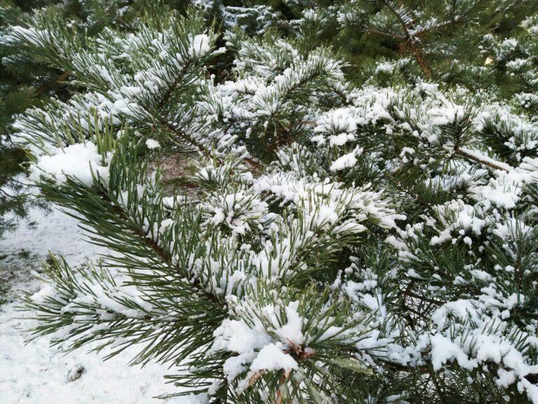 Снегопад и мороз: волгоградцам обещают по-настоящему зимнюю погоду