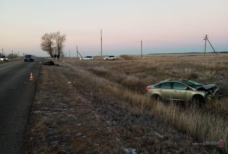 В аварии с участием лошади водитель иномарки и его пассажир получили травмы
