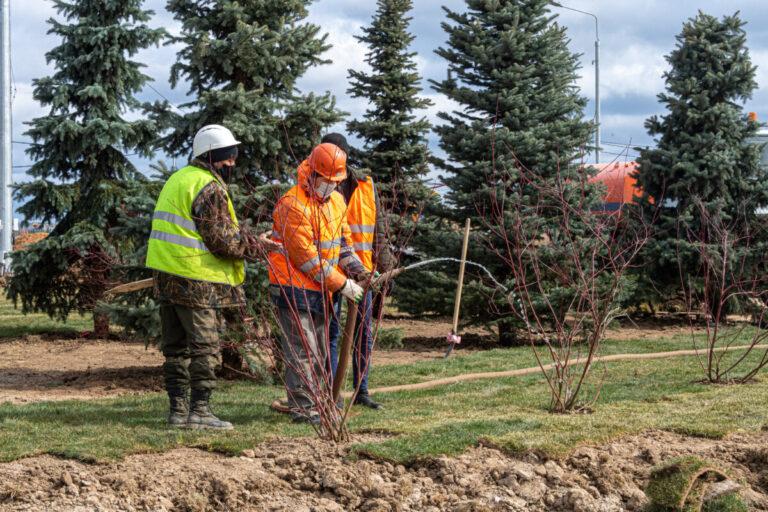 В Волгограде в декабре решили озеленить территорию у первой больницы