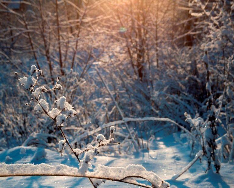 Волгоградцам обещают не по-зимнему теплые выходные