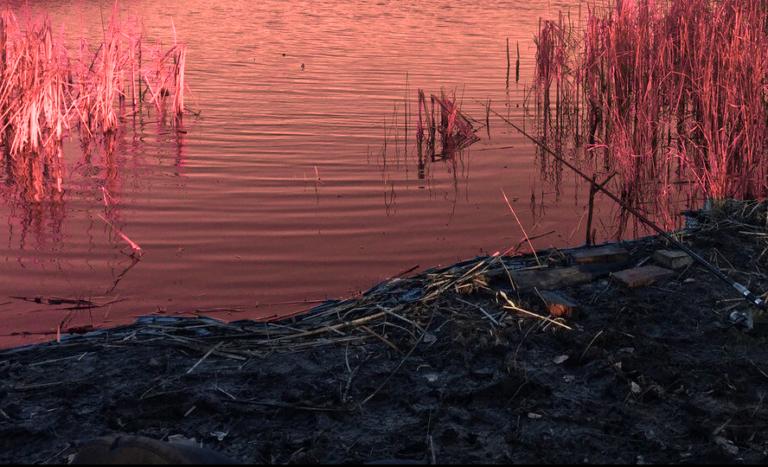"""""""Что за ужас?"""": покрасневшая в Волгоградской области река Арчеда озадачила прокуратуру и экологов"""