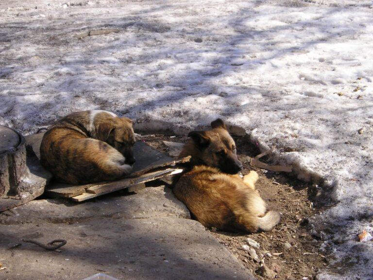 Привьют и выпустят в город: в Волгограде строят еще один вольер для бездомных собак