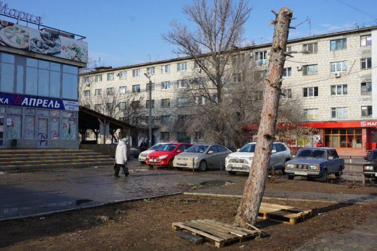 В центре Волжского вандалы искромсали многометровую ель