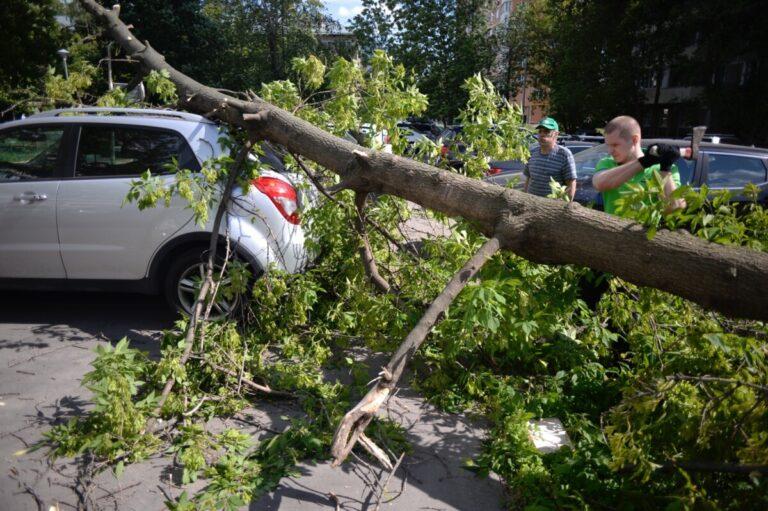 Автомобилисты из Урюпинска смогли взыскать ущерб за рухнувший клен